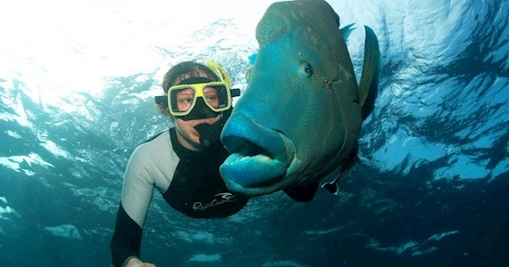 snorkeling with large fish
